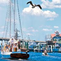 sailboat and pelican in destin harbor