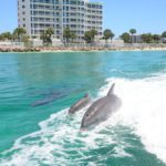 Dolphins spotted during a Destin dolphin sightseeing cruise