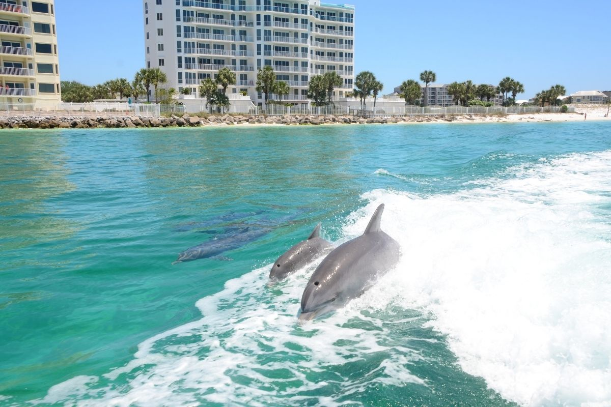 Dolphins spotted on a Destin sightseeing tour