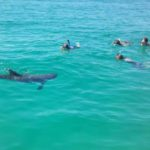 dolphin encounter while snorkeling in Destin