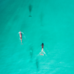 dolphins seen while parasailing in Destin