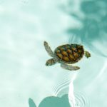 sea turtle spotted on a Destin dolphin watching cruise