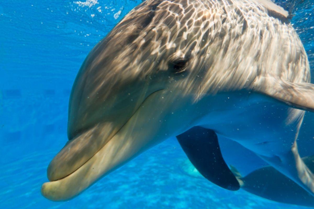 Gulfarium Marine Adventure Park VIP Trainer for a Day