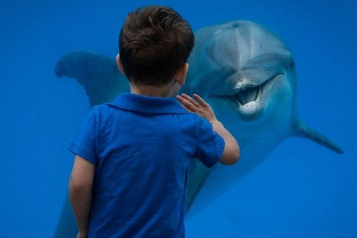 Gulfarium Marine Adventure Park dolphin encounter