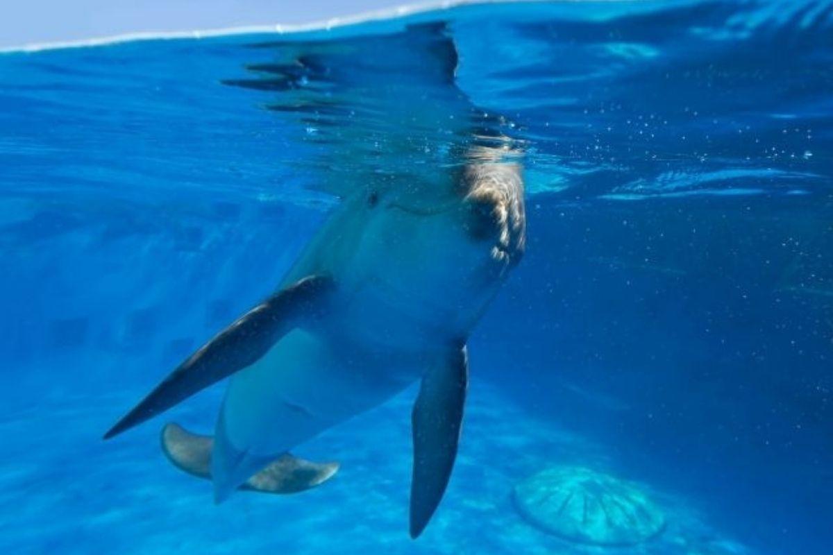 dolphin at Gulfarium Marine Adventure Park