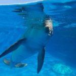 dolphin encounter at Gulfarium Marine Adventure Park