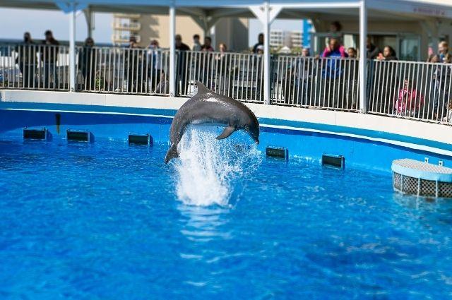 dolphin show at The Gulfarium