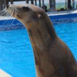 sea lion show at The Gulfarium