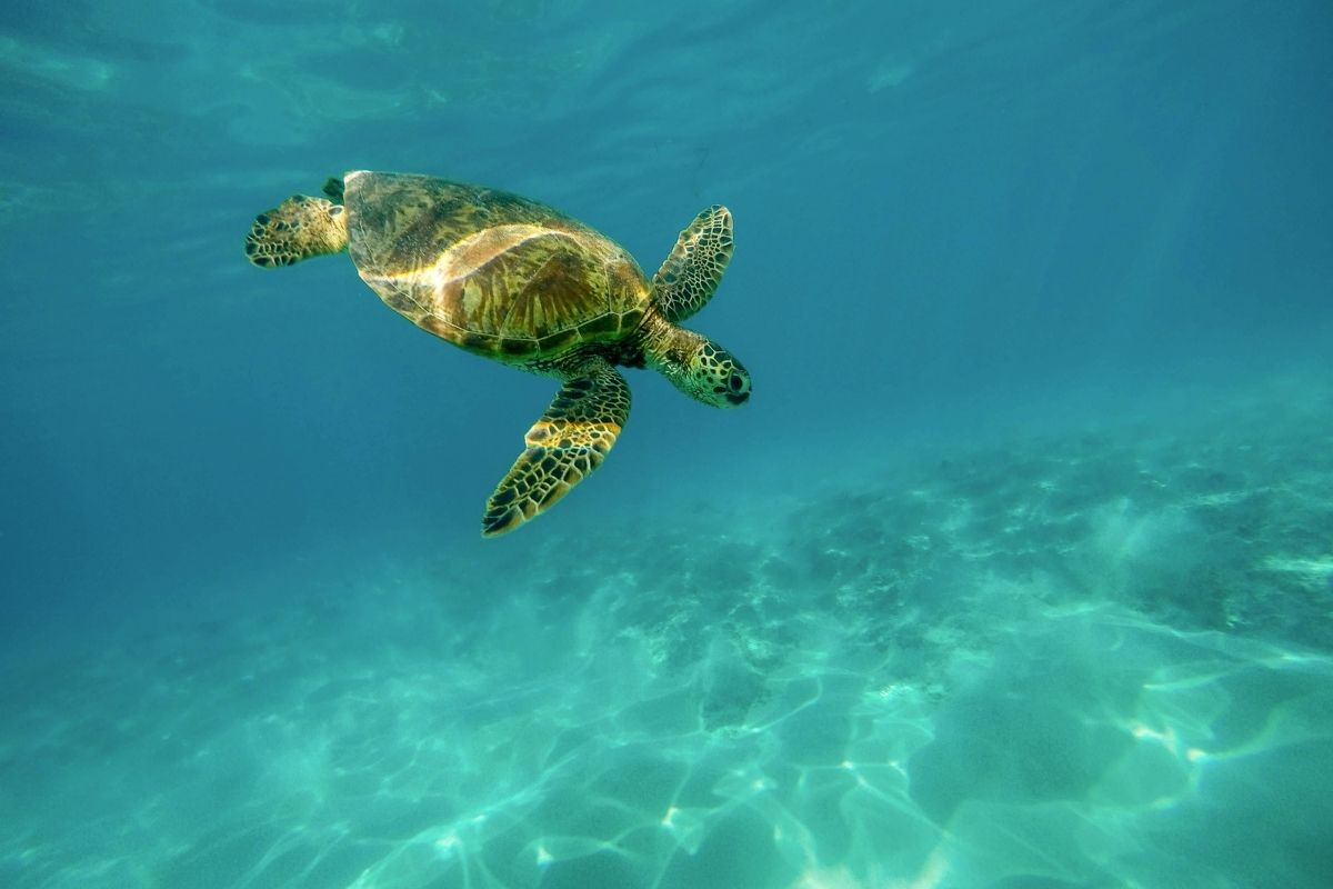 sea turtle spotted at Crab Island